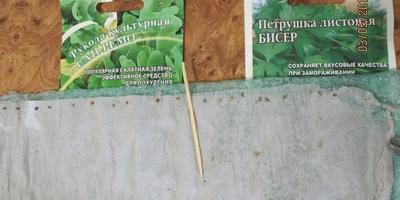 Петрушка листовая Бисер. Тест на всхожесть