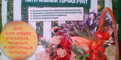 Базилик Русский гигант. Тест на всхожесть