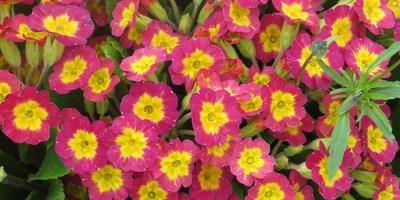 С праздником весны, цветов, улыбок!!!