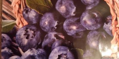 Поделитесь опытом выращивания голубики из семян