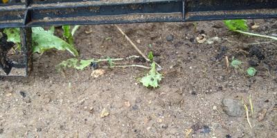Как защитить растения, посаженные в жару. Всем дачникам на заметку