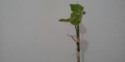 Подскажите название растения. Как ему помочь?