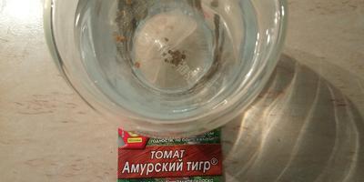 Томат Амурский тигр. I этап. Посев семян