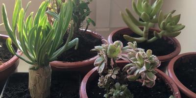 Подскажите, пожалуйста, название растений