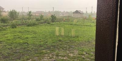 Почему образуются проплешины на газоне?