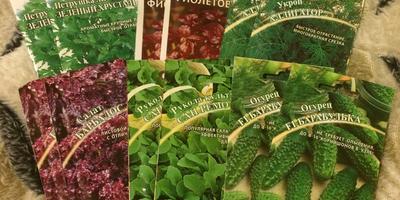 Отчёт о получении семян для тестирования от фирмы Гавриш