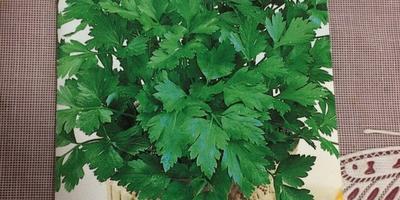 Петрушка листовая Зеленый хрусталь. Тест на всхожесть