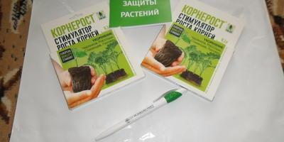 Тестирование препарата Корнерост. Обработка черенков винограда перед проращиванием