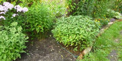"""Как ограничить """"расползание"""" растений по участку. Делюсь простым приемом"""
