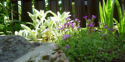 Утренняя пробежка... по саду
