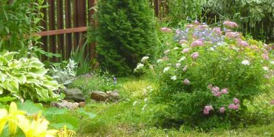Лето в разгаре. Июльская фотосессия для моего сада