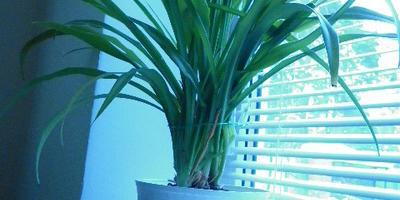 Как можно формировать домашние растения
