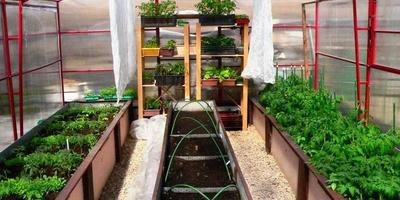 Домашнее задание №3: теплица для раннего урожая