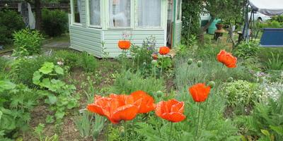 Строим на даче малые сооружения. Садовая беседка. 2012 год (часть 1)
