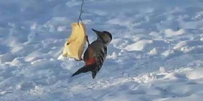 Интересное в мире птиц рядом с домом. Видеофильмы о жизни птиц