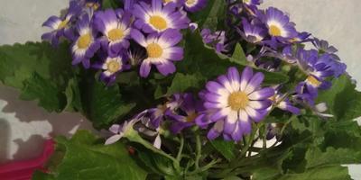 Подскажите, пожалуйста, как называется цветок?