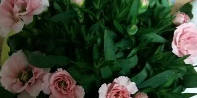 Подскажите, пожалуйста, что это за цветок и как за ним ухаживать?