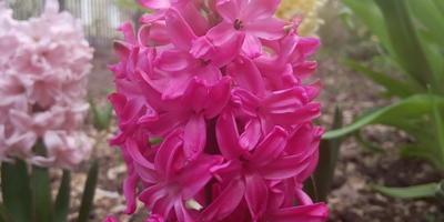 Вторая весенняя волна цветения