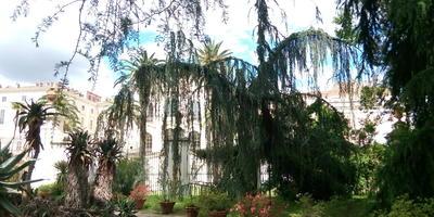 Ботанический сад Рима. Часть 1 - дендрарий