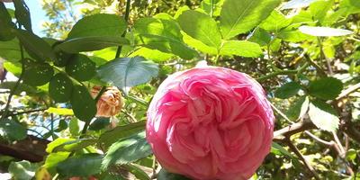 Ботанический сад Рима. Часть 2 - розарий