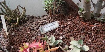Ботанический сад Рима. Часть 3 - кактусы и суккуленты