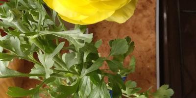 Что это за цветок? И какой за ним уход?