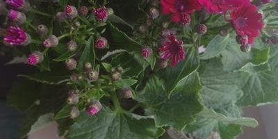 Как называется растение? Какой за ним уход?