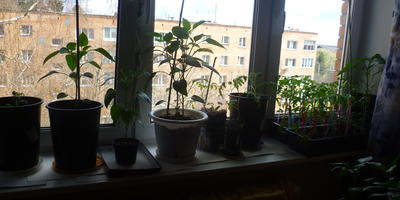 Мой домашний огород