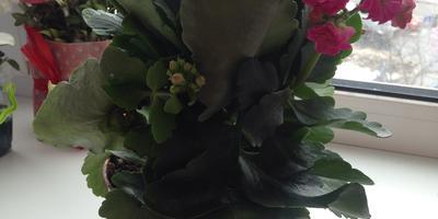 Что это за цветок? И как правильно за ним ухаживать?