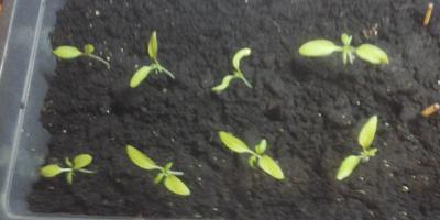 Взошли томаты от Партнера: Лирика, Сокровище Инков