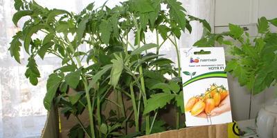 Наши томаты от Партнера от посадки до сбора урожая!