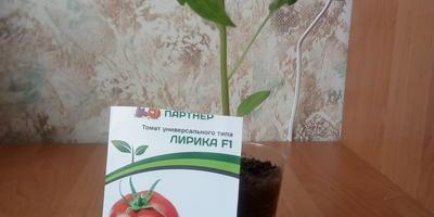 Конкурс томатов от Партнера