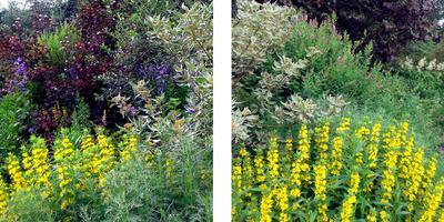 Задумки по посадке цветочно-кустарниковой композиции в поле. Идеи сада Натургарден