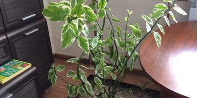 Что это за растения?