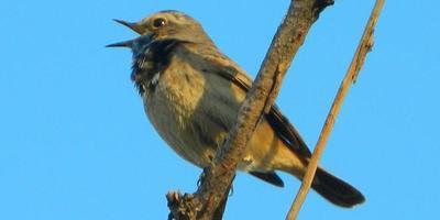 Лечебные птицы