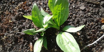Подскажите, пожалуйста, что это за растение? Как за ним ухаживать?