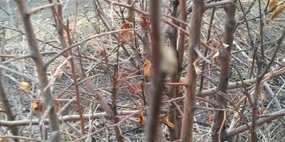 Помогите, пожалуйста, определить вид дерева