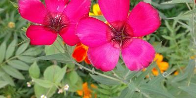 Подскажите, что это за цветочки?