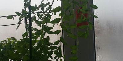 Помогите, пожалуйста, определить названия растений