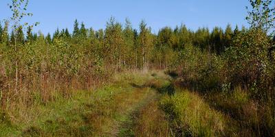 Как мы гуляли по осеннему лесу