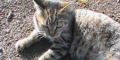 Как примирить котиков?