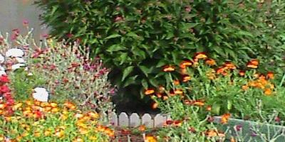 Скоро осень:(( За окнами август, но пока ничего не почернело