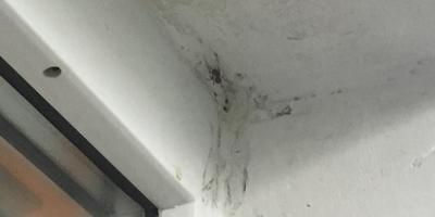 Помогите разобраться, что за паук?