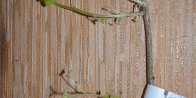 Помогите спасти саженцы малины и клубники