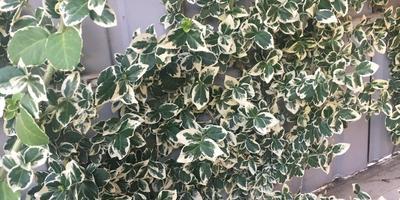 Что это за растение?
