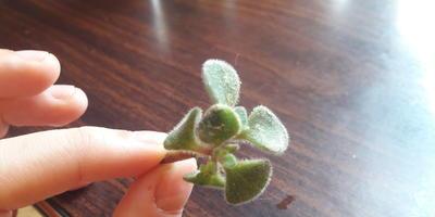 Подскажите название растения. Можно ли его уже сажать?