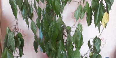 Подскажите название растения и как за ним ухаживать