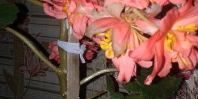 Пожалуйста, скажите, как называется цветок?