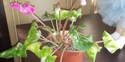 Что это за цветок?