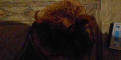 Что это за гриб на видео? Съедобный ли он?